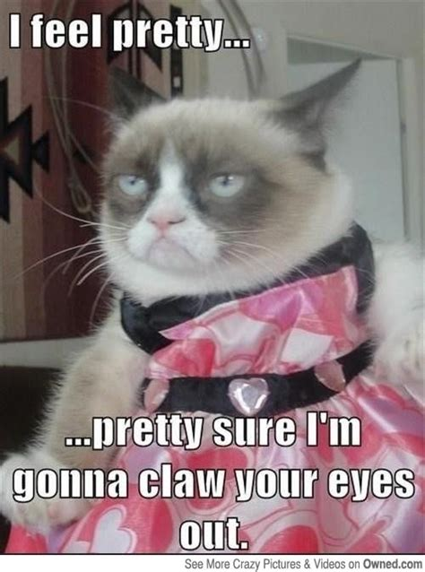 Funny Grumpy Cat Meme - pin by maggie cross on life is good not tard the