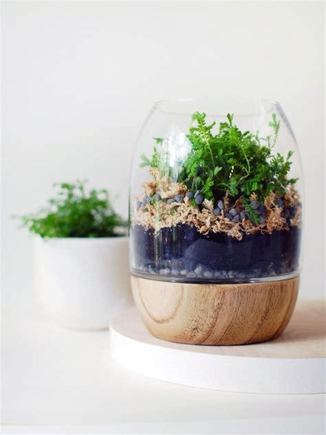 build your own terrarium to capture nature s beauty