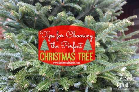 how to choose the perfect christmas tree the farm girl