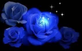 imagenes de rosas azules con brillo y movimiento im 225 genes de rosas azules con brillo y movimiento