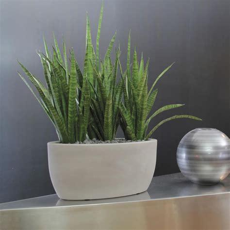 vaso da interno moderno vasi ovale athena nicoli