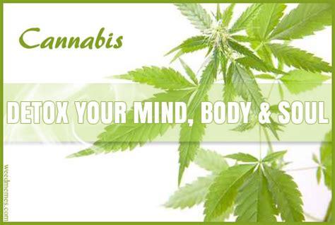 Cannabis Detoxes by Cannabis Detox Mind Soul