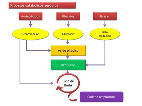cadena lateral de aminoácidos ppt amino 195 161 cidos powerpoint presentation id 2378822