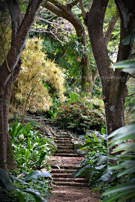 Botanical Gardens In Kauai Pin By Phil Liff Grieff On Places I Experienced