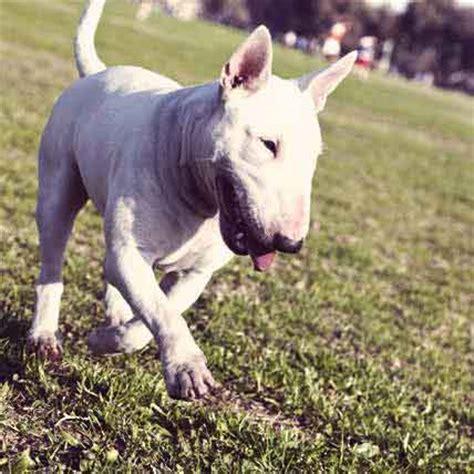 coprophagia in dogs is my 5 strange behaviors explained petcarerx
