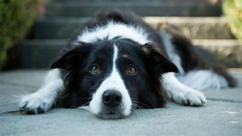 what to give puppy for upset stomach how do you treat your s upset stomach reference