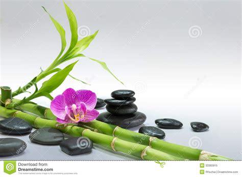 Läuse Bei Orchideen 3723 by Orchid 233 E Pourpre Avec Les Pierres En Bambou Et Noires