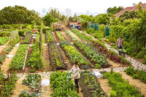 come curare un giardino community garden curare un giardino insieme dove anche