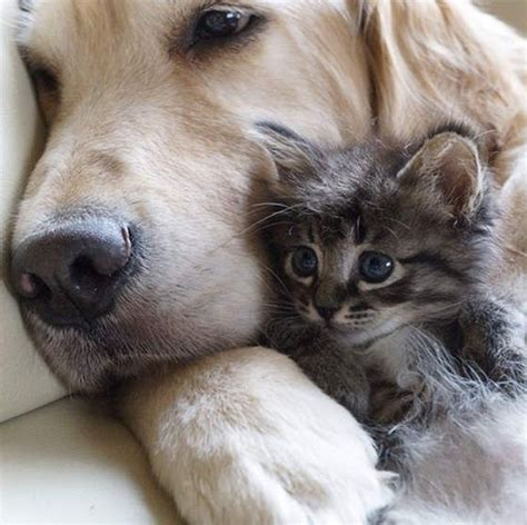 puppies with kittens best 25 kittens and puppies ideas on kittens cats and kittens