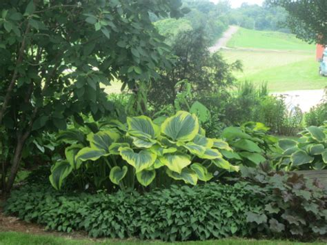 creative ideas for flower bed borders using hostas