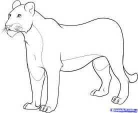 step 8 draw lioness
