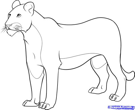 how to draw a lioness step by step safari animals