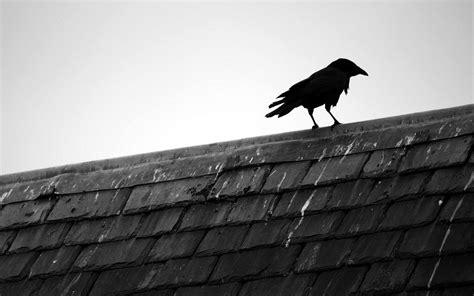 wallpaper black bird crow wallpapers wallpaper cave