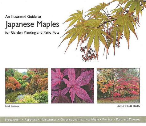 the practical illustrated guide to japanese gardening and growing bonsai essential advice step by step techniques and projects plans plant listings and 1500 photographs and illustrations books an illustrated guide to japanese maples