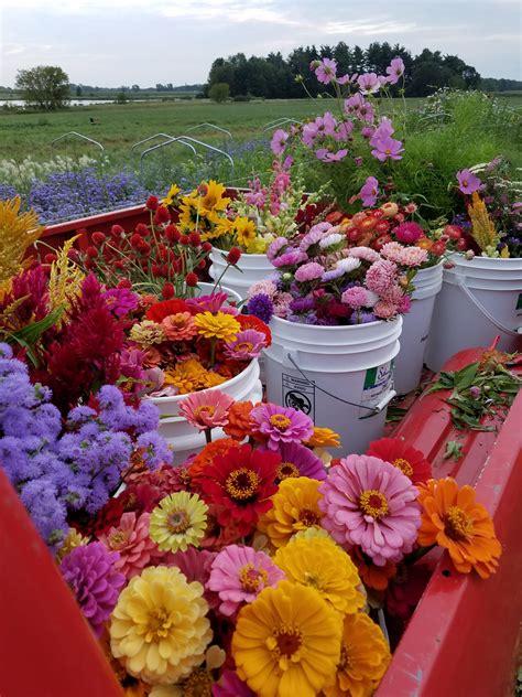 Bulk Flowers by Flowers Bulk Buckets