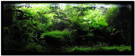 Aquascaping Techniques by Aquascape Of The Month August 2009 Quot Wakrubau