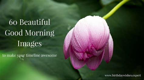 most beautiful images 60 morning images with the most beautiful flowers