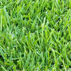 home depot st augustine grass harmony 500 sq ft bermuda sod 1 pallet hh500b1 the
