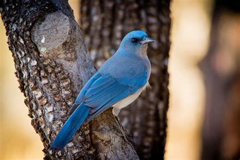 blue colored birds 10 fascinating blue colored birds