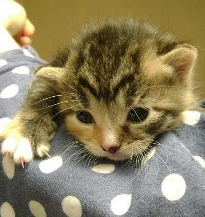has diarrhea but acts cat diarrhea best pet home remedies