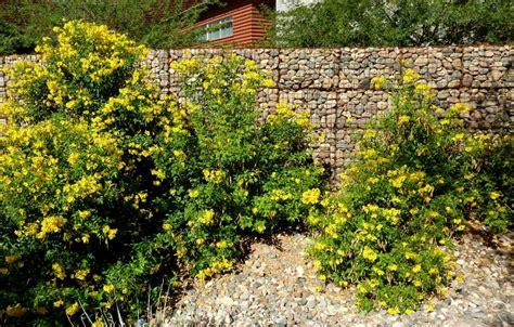 Yellow Möbel by Common Yellow Bells Esperanza Yellow Elder Family