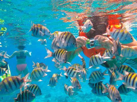 cozumel best beaches cozumel shore snorkeling club cozumel cruise