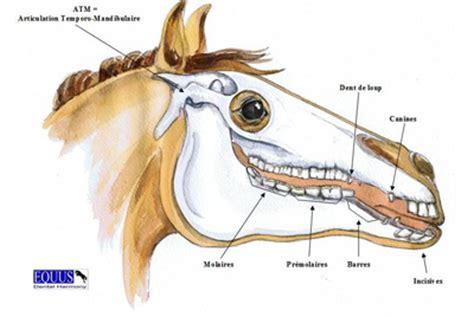 004307474x a tempo partie orale douleur articulation temporo mandibulaire oswald