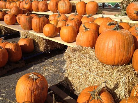 Patchwork Pumpkin - quot fall quot in with montreal ec language school