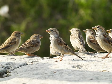 most of us are sparrows growing 4 life