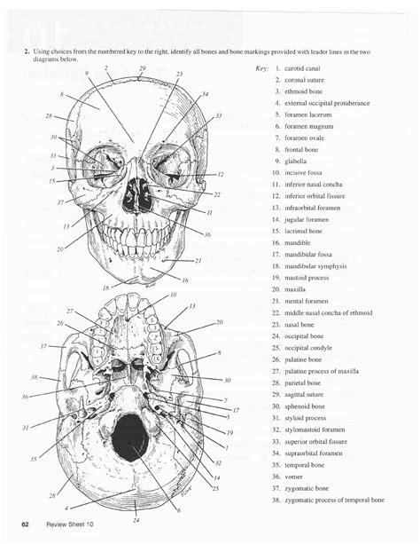 Axial Skeleton Worksheet Answers by Axial Skeleton Labeling Worksheet Photos Dropwin