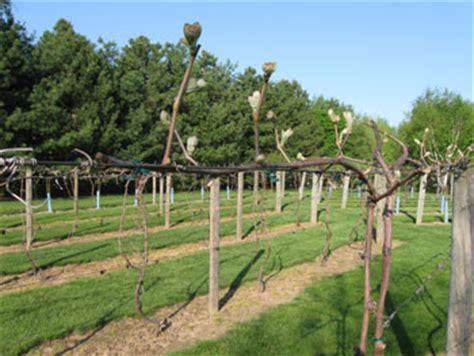 vineyard trellis and winemaker magazine