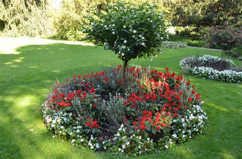 trees to plant in backyard what is a ring garden learn about shrub and tree island beds