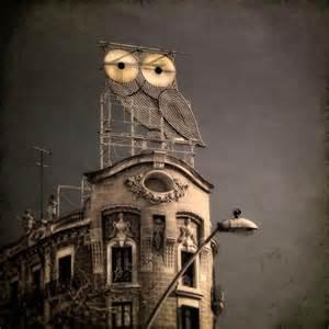 Owl Building Owls Mulatto Diaries