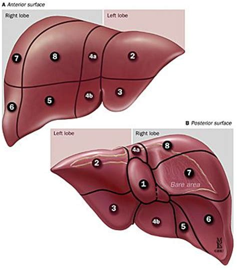 liver failure stages 32 best liver failure stages images on liver failure the stage and what is