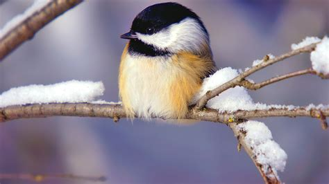 tiny winter bird wallpapers new hd wallpapers