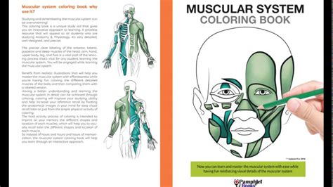 muscular system coloring book 1505699142 muscular system coloring book youtube