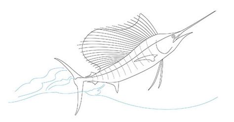 sailfish coloring pages drawing of a sailfish on behance