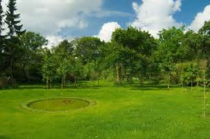 green tree landscaping lawn nature grass garden summer day blue tree pond