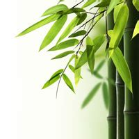 Best Bamboo Sheets Good Housekeeping bamboo labeling can be misleading bamboo fabrics are not