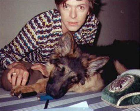 david bowie dogs the 25 best dogs ideas on david bowie dogs david bowie