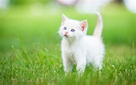 cat  cute funny cat wallpapers image