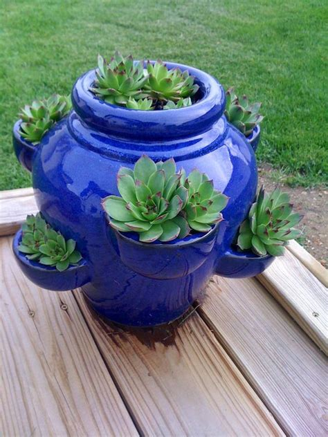 hens succulents and pots on pinterest