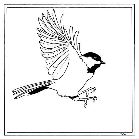 chickadee bird coloring page chickadee coloring page coloring pages