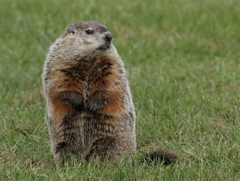 groundhog day ita groundhog s day crossroads at big creek