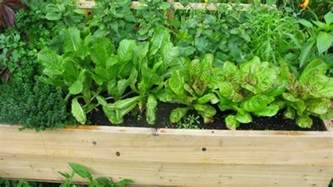 organic container vegetable gardening and organic container gardening easy to grow