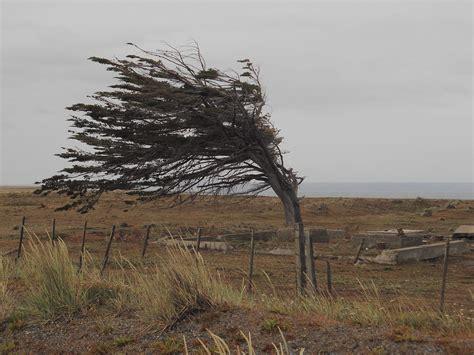 el viento en los preemergencia por vientos fuertes en valencia y norte de alicante alicante news