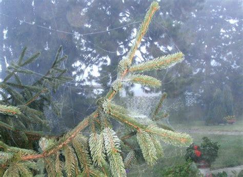 Tali Rami Lu interludio in my garden early morning autumn day