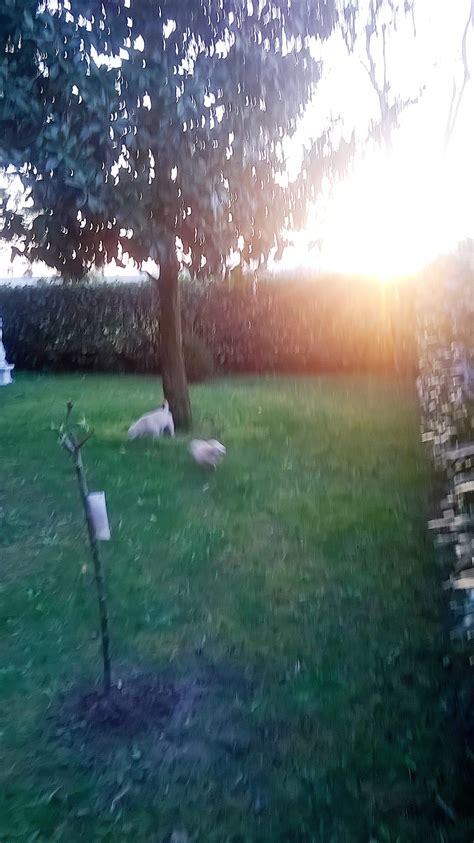 pensione cani pavia s house pensione cani montebello della battaglia