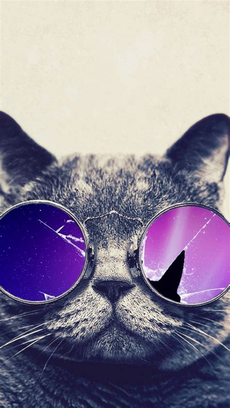 iphone wallpaper cat glasses hd images hd pictures backgrounds desktop wallpapers