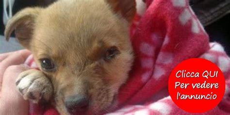 cuccioli di da appartamento annunci di adozione cucciolo di taglia piccola cani
